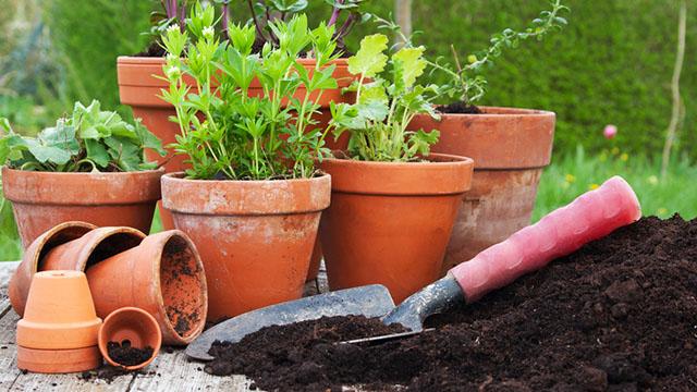 vasi migliori per le piante